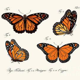 Butterflies - German School
