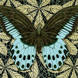 Butterfly 30 by Robert Todd