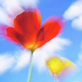 Veikko Suikkanen - California poppies