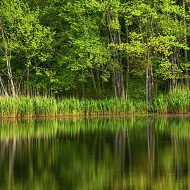 Calming Trees by Karol Livote