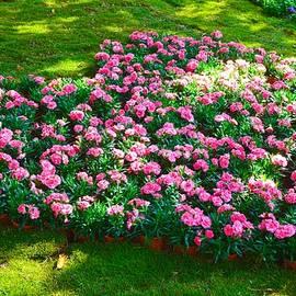 Sonali Gangane - Carnation Heart