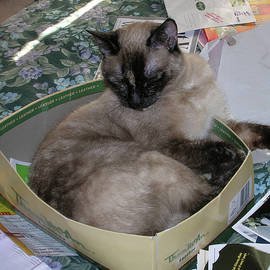 Carolyn Donnell - Cat In A Box