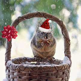 Christmas Squirrel by Peggy Collins