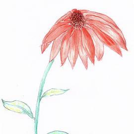 Cone Flower by Judy Hall-Folde