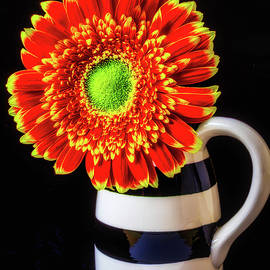 Daisy In Striped Vase - Garry Gay