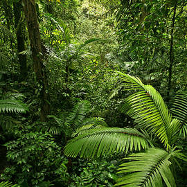 Dense Tropical Rain Forest by Matt Tilghman