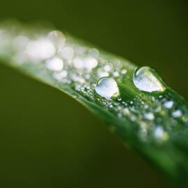 Vishwanath Bhat - Dew drops on blade of grass