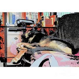 #dogs #gsd #germanshepherd