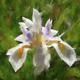 Linda Brody - 1 Double White Iris Abstract with Impression and Texture Finish