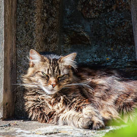 Dozing In The Sun by Geoff Smith