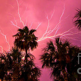 Electrified Palms by Stephen Whalen