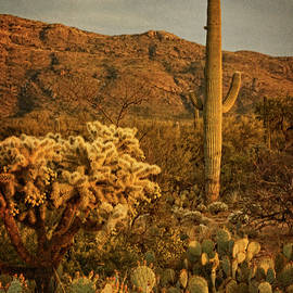 End Of A Desert Day Tx by Theo O'Connor