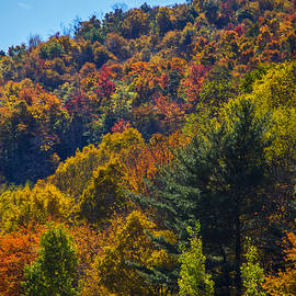 Fall Foliage with Cloud by Lee Newell