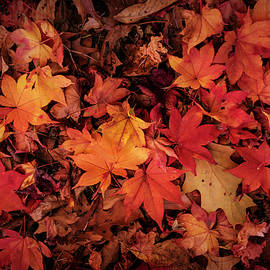 Fall Mosaic by Rima Biswas
