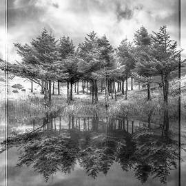 Fire in Black and White by Debra and Dave Vanderlaan