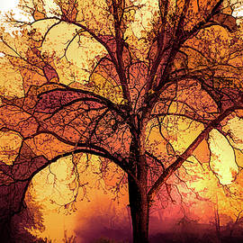 Fire in the Trees by Debra and Dave Vanderlaan