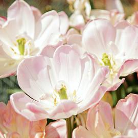 Svetlana Yelkovan - Flower Tenderness