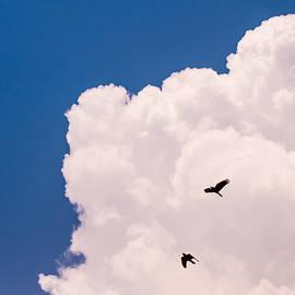 Jenny Rainbow - Flying Free