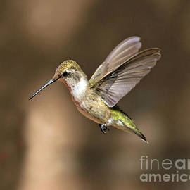 Flying Hummingbird by Stephen Whalen