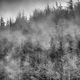 Guido Montanes Castillo - Foggy woods