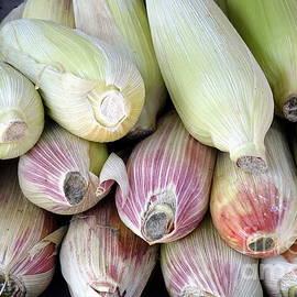 Yali Shi - Fresh Corn Cobs
