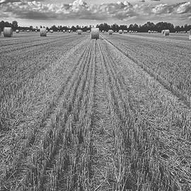pixabay - freshly cut hayfield