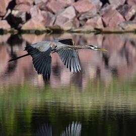 Great Blue Heron by Margarethe Binkley