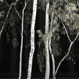 Gum Trees - Canberra - Australia by Steven Ralser