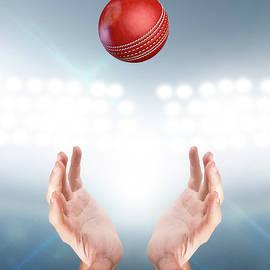 Hands Catching Ball - Allan Swart