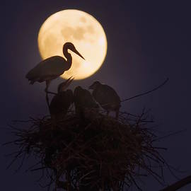 Heron Nest With Full Moon by Dale J Martin