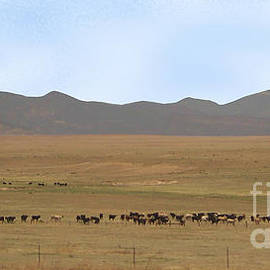 Home On The Range by Charles Robinson