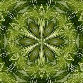 Hordeum Jubatum Kaleidoscope by J McCombie