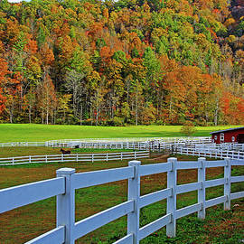 Horse Farm by Richard Krebs