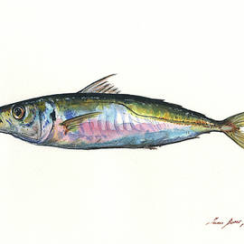 Horse mackerel  - Juan Bosco