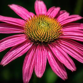 Robert Fawcett - Hot Pink