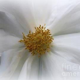 Dora Sofia Caputo Photographic Design and Fine Art - Innocence -  White Peony