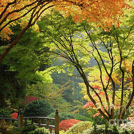 Moon Bridge Surrounded by Autumn Foliage at Portland Japanese Garden by Tom Schwabel