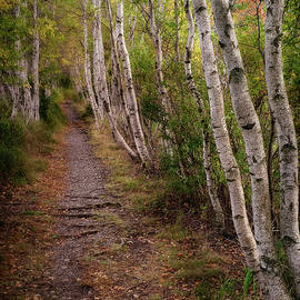 Jesup Path - Acadia National Park - Jeff Bazinet