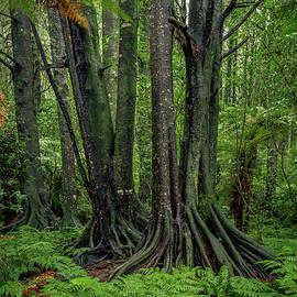 Jungle scene - Les Cunliffe