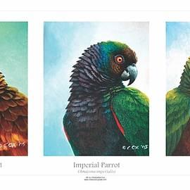 Lesser Antillean Parrots Triptych by Christopher Cox
