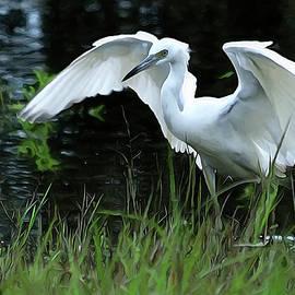 Little Blue Heron Hunting - DigitalArt by Roy Williams