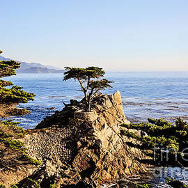 Lone Cypress - POV1 by Scott Pellegrin
