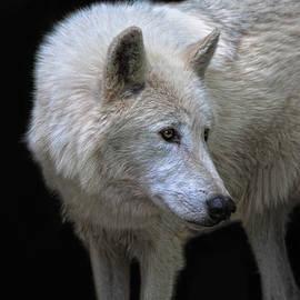 Joachim G Pinkawa - Lone Wolf