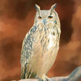 Long Eared Owl by Jim Hatch