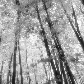 Lyle Crump - Looking Up In The Forest