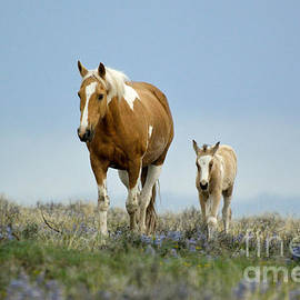 Ginger Harter - Mare and foal