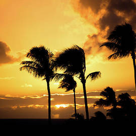 Maui Sunset Palms by Kelly Wade