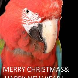 Anand Swaroop Manchiraju - Merry Christmas-3