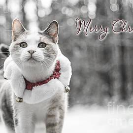 Merry Christmas by Alana Ranney