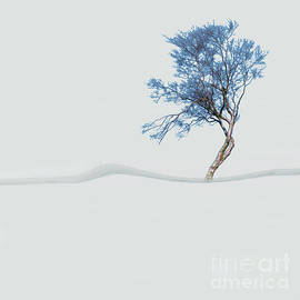 Mindfulness Tree by LemonArt Photography